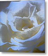 Rose 186 Metal Print by Pamela Cooper