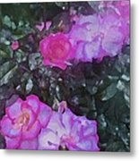 Rose 189 Metal Print by Pamela Cooper