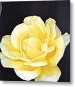 Rose 196 Metal Print
