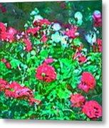 Rose 201 Metal Print
