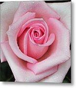 Rose 22 Metal Print