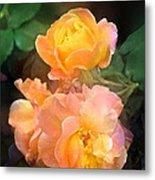 Rose 221 Metal Print
