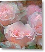 Rose 243 Metal Print