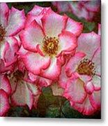 Rose 298 Metal Print