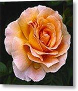 Rose 4 Metal Print