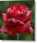 Rose 9 Metal Print