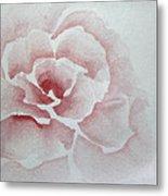 Rose Absolute Metal Print
