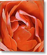 Rose Abstract Metal Print by Rona Black