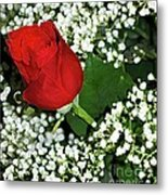Rose And Baby's Breath Metal Print
