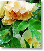 Rose And Leaves On A Rainy Day Metal Print