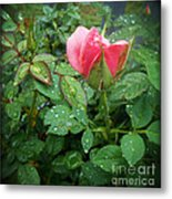 Rose And Rain Drops Metal Print by Eva Thomas