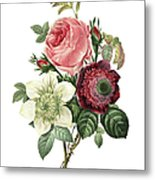 Rose, Anemone And Clematis | Redoute Metal Print