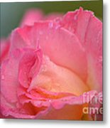 Rose Beauty Metal Print