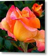Rose Beauty Metal Print