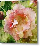 Rose Begonia In Pink Metal Print