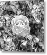 Rose Black Metal Print