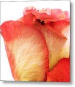 Rose Bud 1 Metal Print