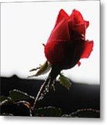 Rose Bud 2011 Metal Print