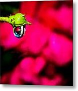 Rose Bud After Rain Metal Print