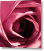 Rose Bud Petals Metal Print