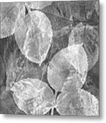 Rose Clippings Mural Wall 2 - Black And White Metal Print