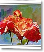 Rose Colours Metal Print