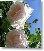 Rose Duo Metal Print