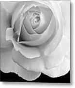Rose Flower Macro Black And White Metal Print