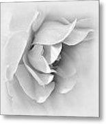 Rose Flower Soft Gray Metal Print