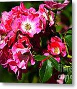 Rose Garden 4 Metal Print