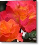Rose Glow Metal Print