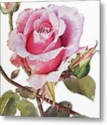 Watercolor Of Pink Rose Grace Metal Print