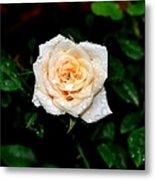 Rose In The Rain Metal Print