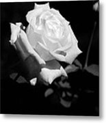 Rose - Infrared Metal Print