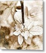 Rose Leaf Photoart Metal Print