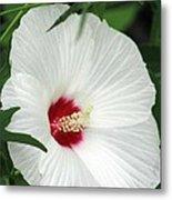 Rose Mallow - Honeymoon White With Eye 05 Metal Print