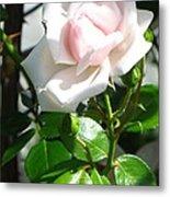 Rose Named Pearl Metal Print