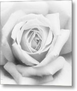 Rose Of Innocence Metal Print