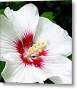 Rose Of Sharon # 1 Metal Print