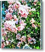 Rose Of Sharon -hibiscus Syriacus Metal Print by Margaret Newcomb