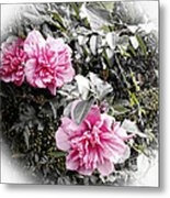 Rose Of Sharon-vintage Warmth Metal Print
