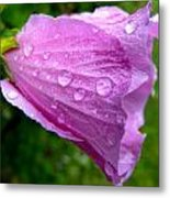 Rose Of Sharon With Rain Metal Print