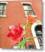 Rose On Brownstone Metal Print