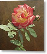 Rose On Thornridge Road Metal Print