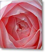 Rose Opening Metal Print
