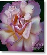 Rose Petals Straight From My Heart Metal Print