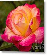 Rose Rainbow Sorbet Metal Print