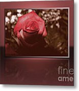 Rose Reflection 1 Metal Print