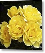 Rose (rosa 'especially For You') Metal Print