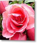 Rose Roses Metal Print